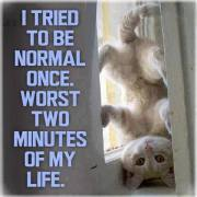 I tried to be normal cat